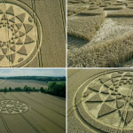 Huge crop circle draws visitors – Farmer asking £2 donations to cover cost